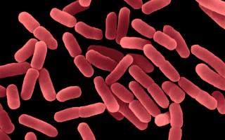 Причины бактерий в моче у женщин и мужчин
