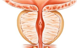 Нормальный объем и размеры предстательной железы