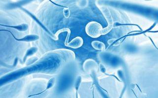 Улучшение качества спермограммы