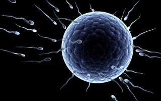 Активность сперматозоидов