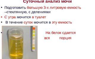 Суточный анализ мочи на белок