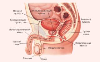 Боль в яичках после семяиспускания