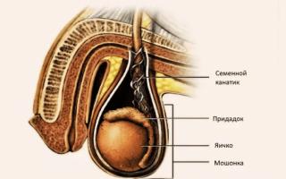 Опухоль семенного канатика у мужчин