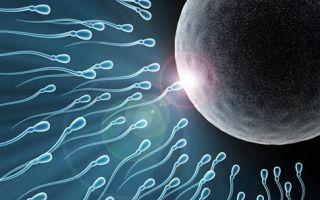 Мужская фертильность