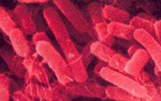 Бактериальный инфекционный простатит