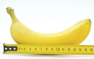 Каким должен быть нормальный размер полового члена