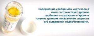 Норма кортизола в суточной моче