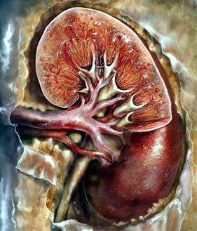 Можно ли вылечить гломерулонефрит хронический