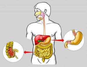 Шиповник стимулирует работу пищеварительной системы