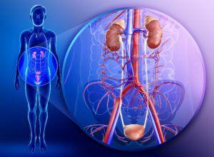 Патологии мочеполовой системы