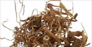 корни крапивы двудомной
