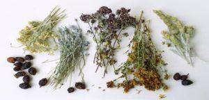 Лечение простаты травами