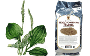 Для улучшения качества спермы применяют отвар из семян подорожника
