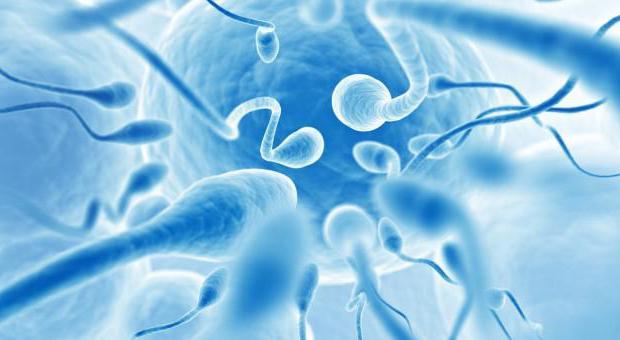 Упражнения для подвижности сперматозоидов зарегистрировался