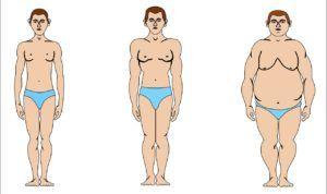 При недостатке мужских половых гормонов наблюдаются признаки телосложения женского типа