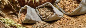Отруби и зерновые культуры эффективно борются с опухолевыми клетками