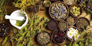 Травы и растения для улучшения потенции у мужчин