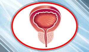 Предстательная железа
