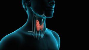 Эндокринная система отвечает за синтез гормонов, в том числе и тестостерона