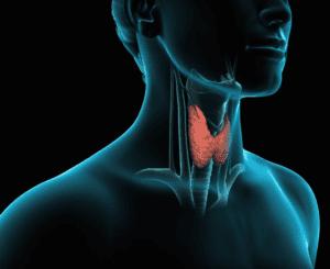 болезни щитовидной железы являются одной из причин возникновения олиготератозооспермии