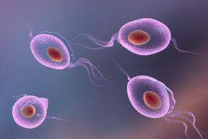 Трихомонада поражает ткани и органы мочеполовых путей