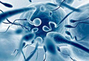 агглютинация сперматозоидов